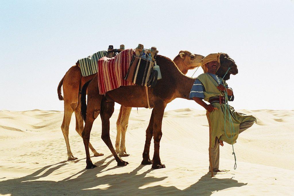 Sahara - Nasser mit 2 Dromedaren